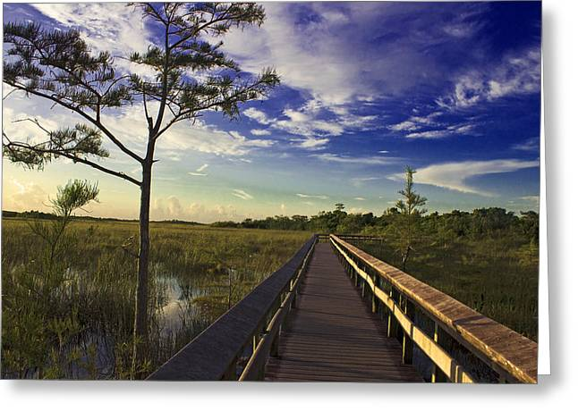 Shades State Park Greeting Cards - Everglades  Greeting Card by Swank Photography