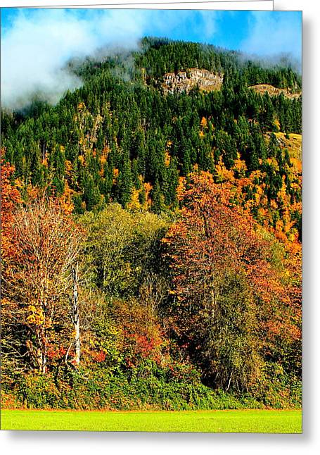 North Cascades Greeting Cards - Evergreen Color Greeting Card by Benjamin Yeager