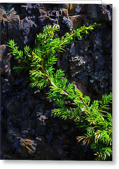 Maine Spring Greeting Cards - Evergreen Creeper Greeting Card by Bill Caldwell -        ABeautifulSky Photography