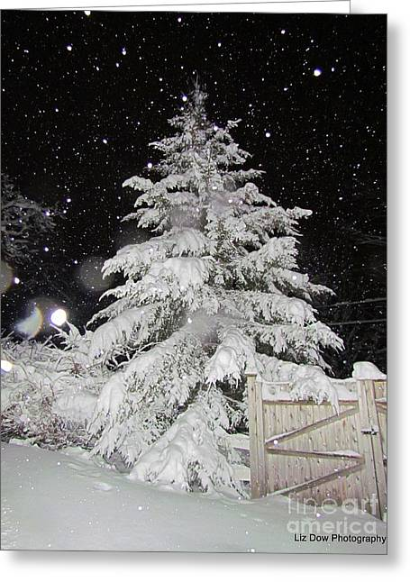 Most Favorite Photographs Greeting Cards - Evergreen Tree in Snow Greeting Card by Elizabeth Dow