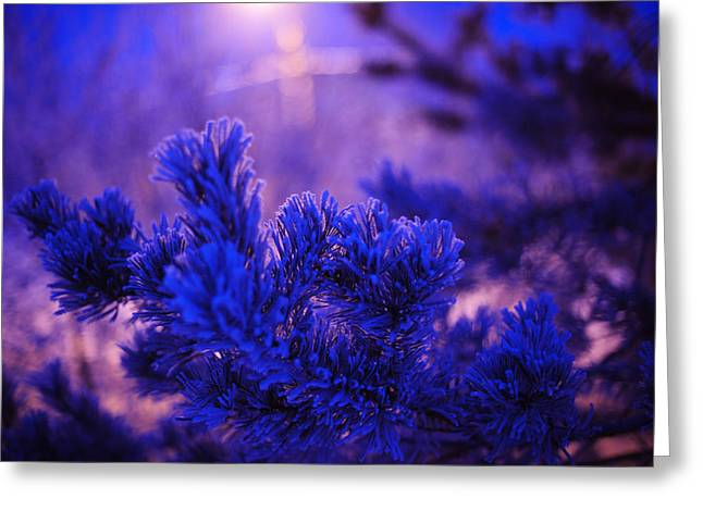 Snowy Night Night Greeting Cards - Evergreen Tree in Twilight Greeting Card by Jenny Rainbow