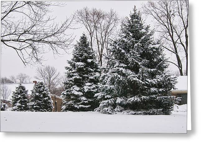 Holliday Scene Greeting Cards - Evergreens in the Snow Greeting Card by Phyllis Taylor