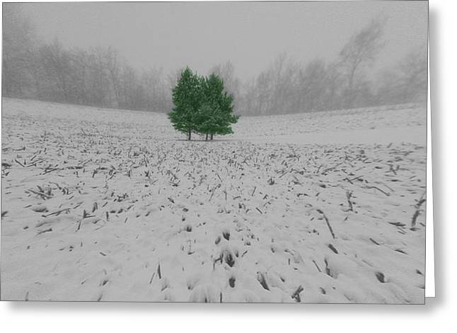 Christmas Tree In Nature Greeting Cards - Evergreens In The Winter Greeting Card by Dan Sproul
