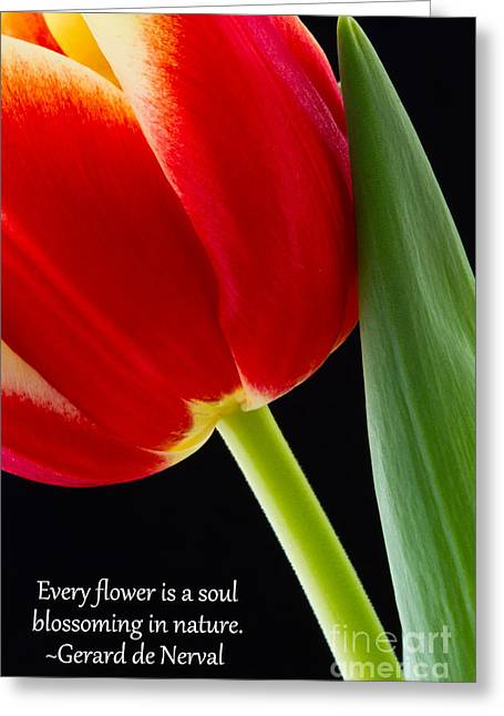 Photos With Red Greeting Cards - Every Flower is a Soul Blossoming in Nature Inspirational Art Greeting Card by Dawna  Moore Photography