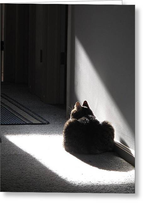 Kitteh Greeting Cards - Everybody Needs a Sunny Spot Greeting Card by Louise St Romain