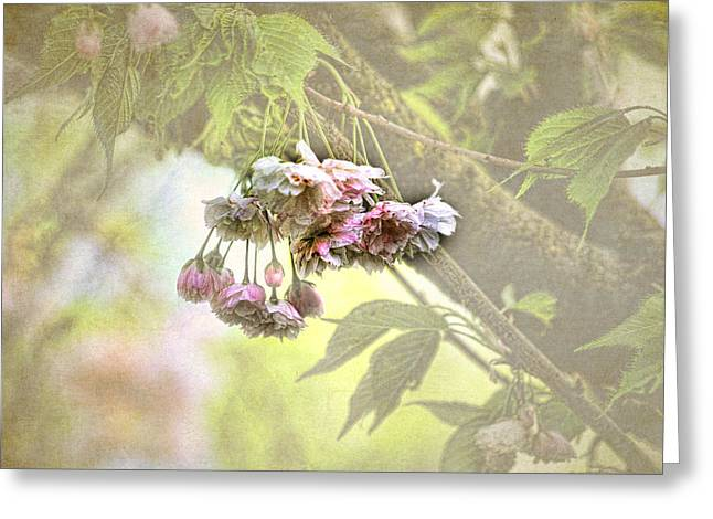 Pink Blossoms Digital Greeting Cards - Everyday Blessings Greeting Card by Bonnie Bruno