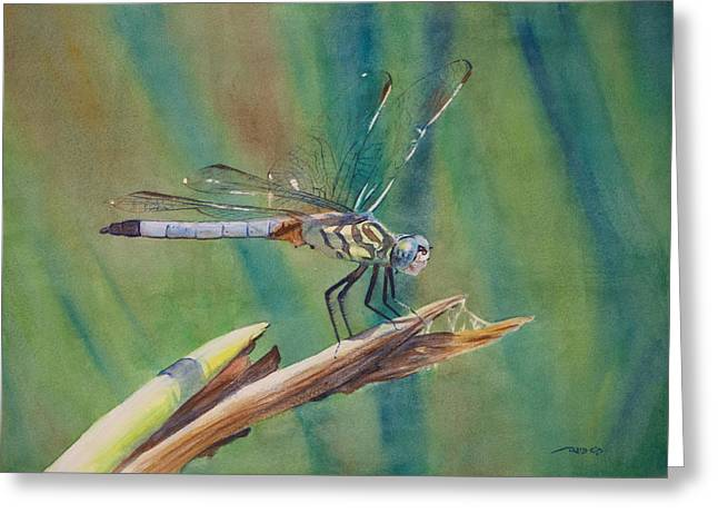 Dragonflies Greeting Cards - Evinrude Greeting Card by Christopher Reid
