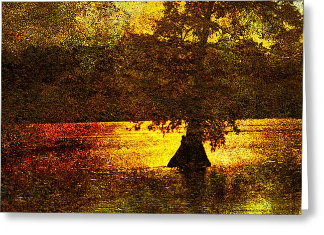 Cypress Tree Digital Art Greeting Cards - Evocative Waterscape Sunrise Greeting Card by J Larry Walker