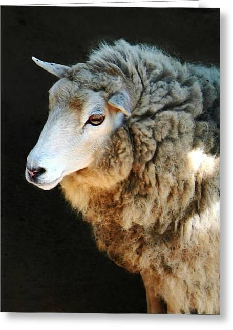 Ovine Greeting Cards - Ewe Are So Beautiful Greeting Card by Ellen Henneke