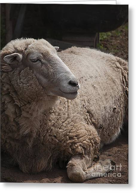 Mother Land Greeting Cards - Ewe Greeting Card by Terry Rowe