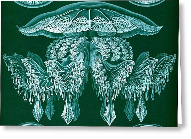 Examples Of Discomedusae Greeting Card by Ernst Haeckel