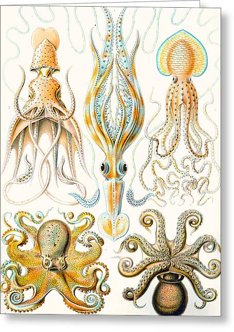 Hierarchical Greeting Cards - Examples of various Cephalopods Greeting Card by Ernst Haeckel