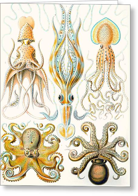 Examples Of Various Cephalopods Greeting Card by Ernst Haeckel