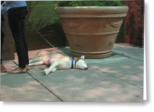 Concrete Planter Greeting Cards - Exhausted Dog Greeting Card by David Lovins