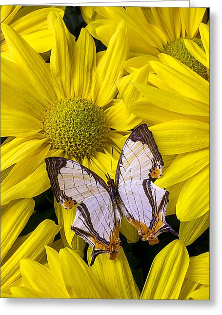 Antenna Greeting Cards - Exotic Butterfly Greeting Card by Garry Gay