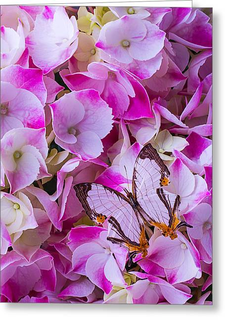 Exotic Photographs Greeting Cards - Exotic Butterfly On Hydrangea Greeting Card by Garry Gay