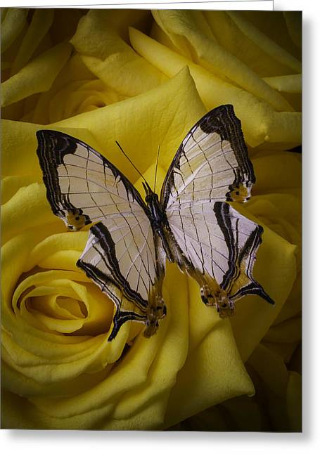 Exotic Photographs Greeting Cards - Exotic Butterfly On Rose Greeting Card by Garry Gay