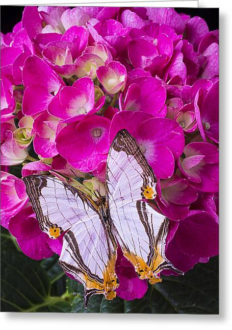 White Butterfly Greeting Cards - Exotic Butterfly Resting Greeting Card by Garry Gay
