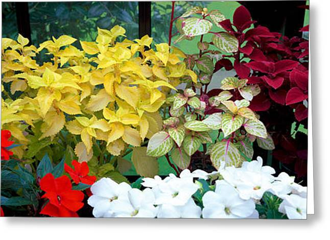 Garden Scene Photographs Greeting Cards - Exotic Flowers In Glasgow Botanic Greeting Card by Panoramic Images