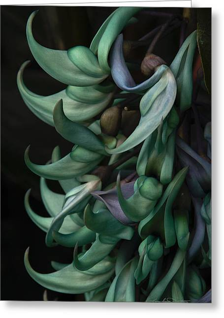 Strongylodon Macrobotrys Greeting Cards - Exotic Jade Vine Greeting Card by Karen Casey-Smith