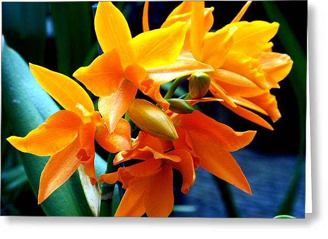 Flower Blossom Greeting Cards - Exotic Orange Greeting Card by Karen Wiles