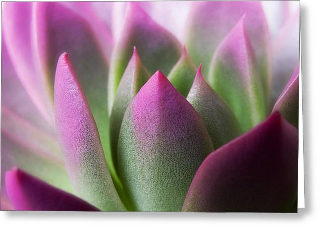 Exotic - Pink Purple Green Flower Landscape Photograph Greeting Card by Artecco Fine Art Photography