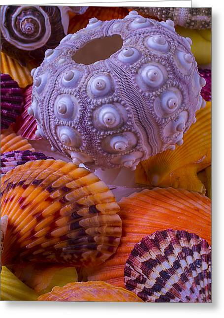 Exotic Photographs Greeting Cards - Exotic Sea Shells Greeting Card by Garry Gay