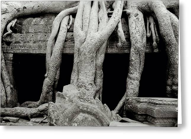 Temple Of Ta Prohm Greeting Cards - Exotic Ta Prohm Greeting Card by Shaun Higson