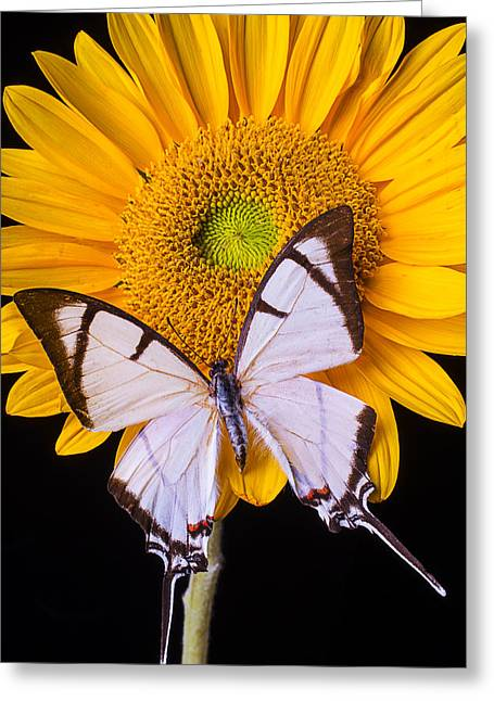 Exotic Photographs Greeting Cards - Exotic White Butterfly Greeting Card by Garry Gay