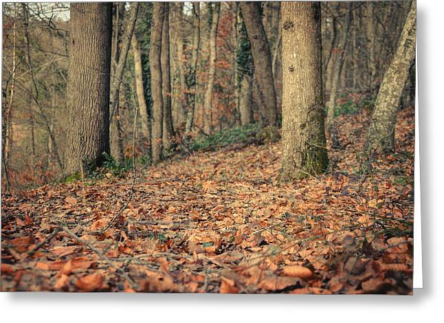 Photos Of Autumn Greeting Cards - Expectation Greeting Card by Taylan Soyturk