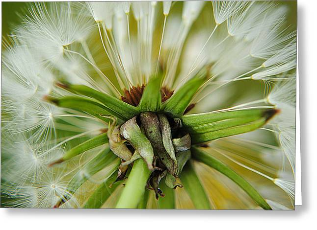 Germinate Greeting Cards - Expired Greeting Card by Frozen in Time Fine Art Photography