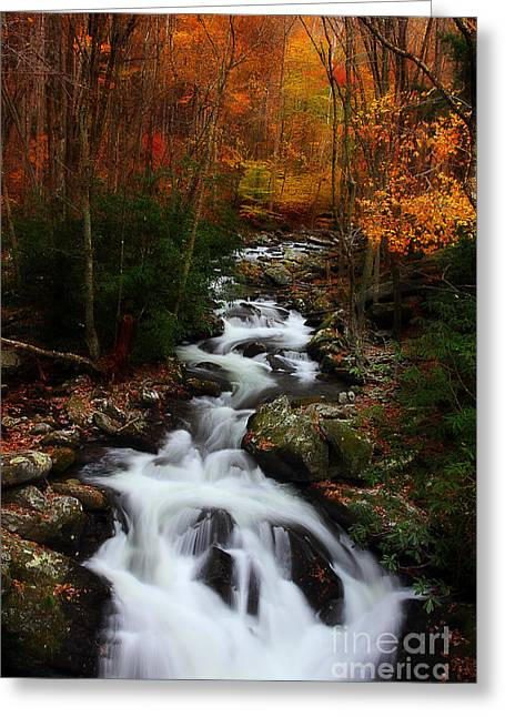 Late Fall Greeting Cards - Exploring Autumn Greeting Card by Michael Eingle
