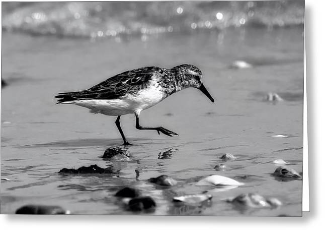 Prancing Bird Greeting Cards - Exploring the Beach Greeting Card by Mountain Dreams