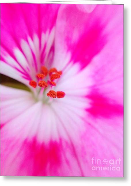 Gastonia Greeting Cards - Explosion of Pink Greeting Card by Gina ODonoghue