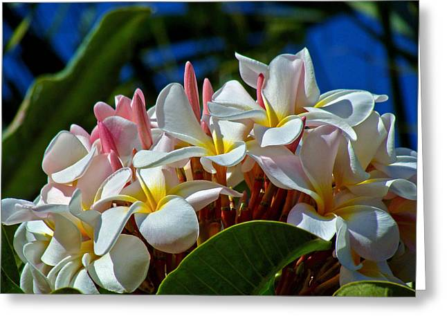 Lei Greeting Cards - Expressions of Love - Plumeria Greeting Card by Karon Melillo DeVega