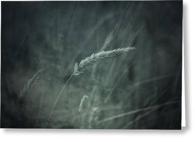 Winter Wheat Greeting Cards - Extended Nights Greeting Card by Mark  Ross
