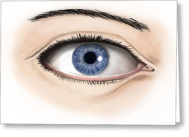 Eyebrow Digital Greeting Cards - External Anatomy Of The Human Eye Greeting Card by Alan Gesek