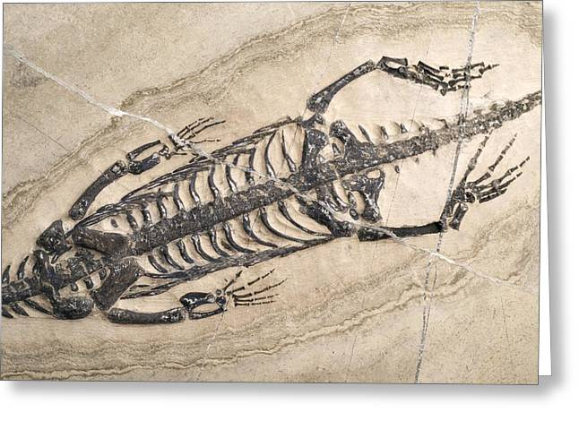 Aquatic Greeting Cards - Extinct Reptile Skeleton Greeting Card by Science Photo Library