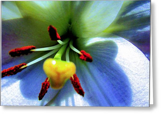 Extrem Lily Heart Greeting Card by Danielle  Parent