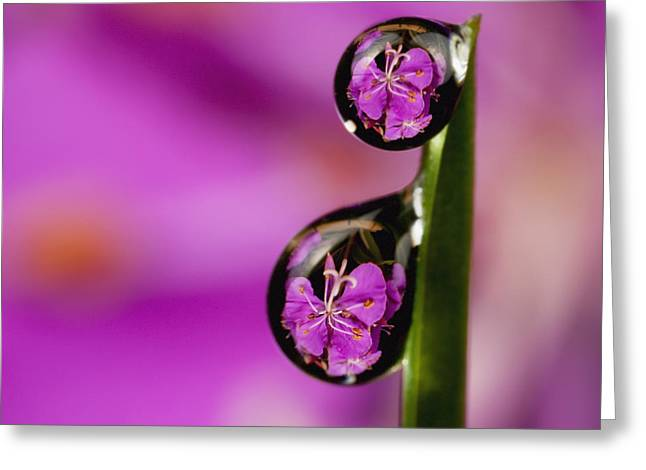 Inverted Color Greeting Cards - Extreme Macro View Of Fireweed Bloom Greeting Card by Marion Owen