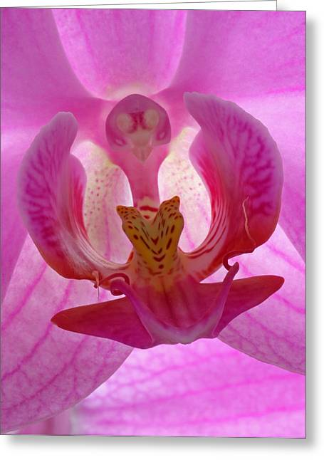 Orchid Canvas Greeting Cards - Extremely Loud And Incredibly Close Greeting Card by Juergen Roth