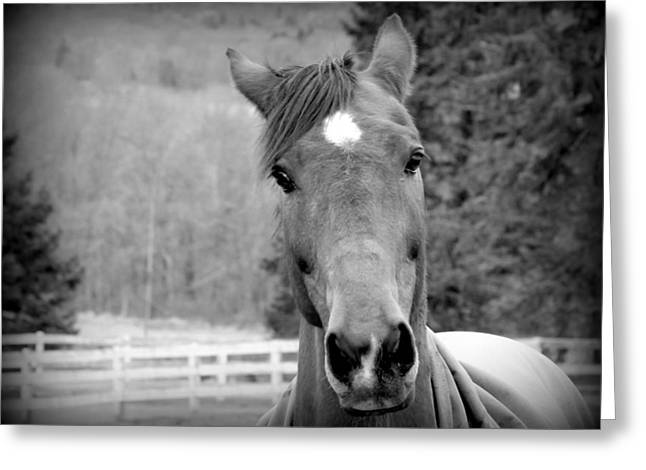 Gnarly Greeting Cards - Eye Contact in Black and White Greeting Card by Aurelio Zucco