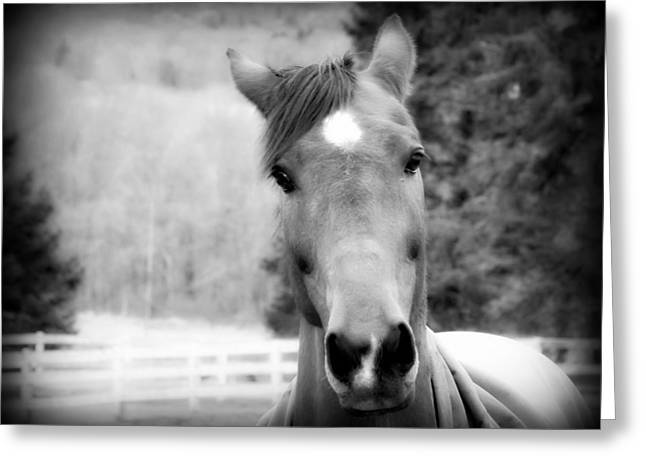 Gnarly Greeting Cards - Eye Contact in Black and White Orton Effect Greeting Card by Aurelio Zucco