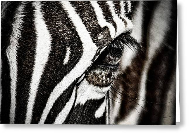 Eyelash Greeting Cards - Eye Contact Greeting Card by Mike Gaudaur