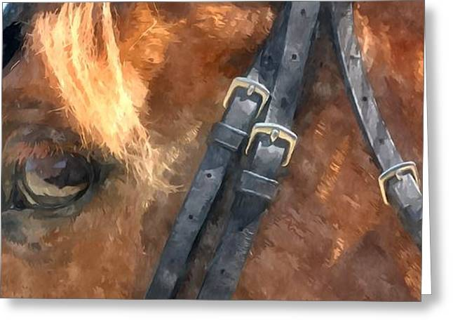 Breeds Greeting Cards - Eye of  horse closeup Greeting Card by Lanjee Chee
