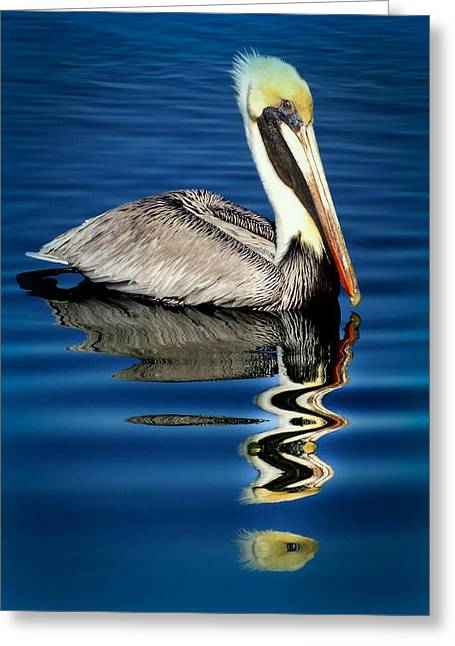 Sea Birds Greeting Cards - EYE of REFLECTION Greeting Card by Karen Wiles