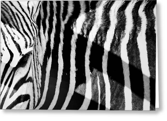Zebra Patterns Greeting Cards - Eye of the beholder  Greeting Card by A Rey
