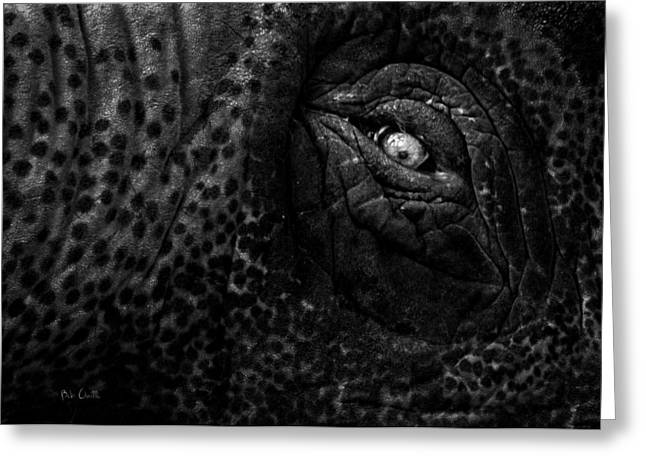 Eye of the Elephant Greeting Card by Bob Orsillo