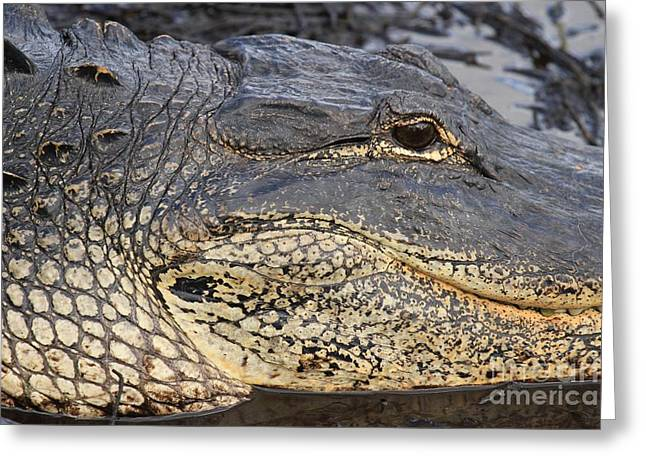 Eye Of The Gator Greeting Card by Adam Jewell