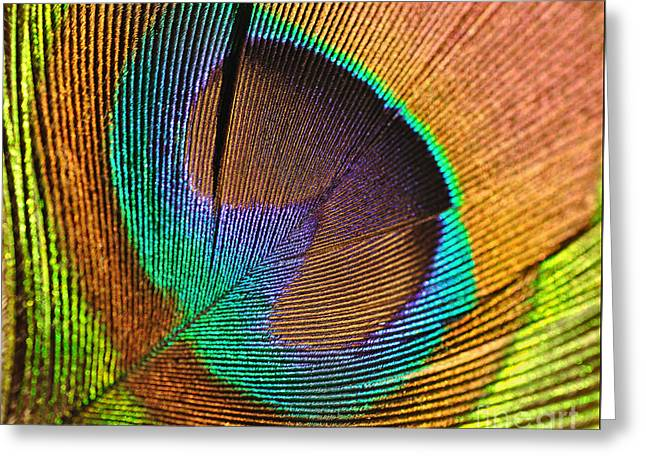 Converting Greeting Cards - Eye of the Peacock Greeting Card by Kaye Menner